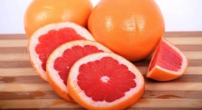 Польза употребления ребенком грейпфрутового сока – миф или реальность?