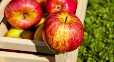 яблоки.jpg