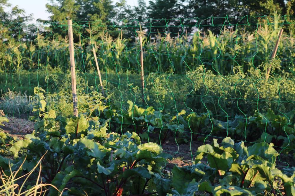 Шпалери для вирощування огірків