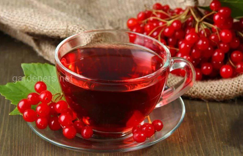Чай из побегов калины