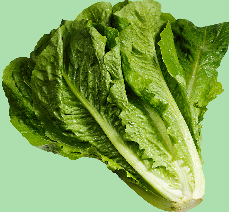 Як вирощувати та використовувати латук посівний та шпинат?