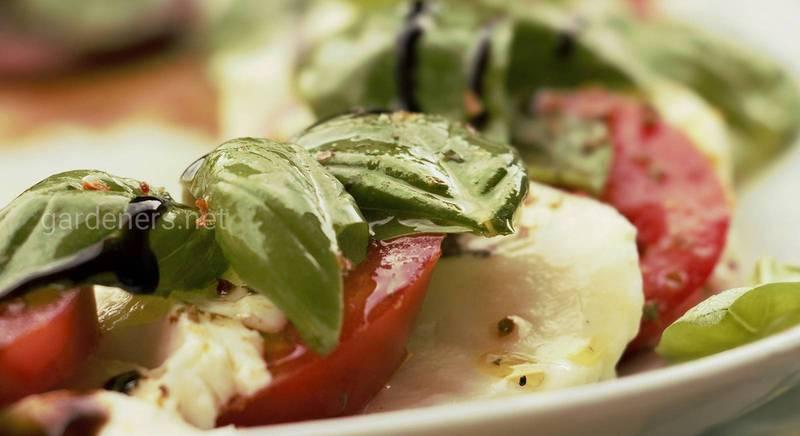 Лучшие блюда из помидоров