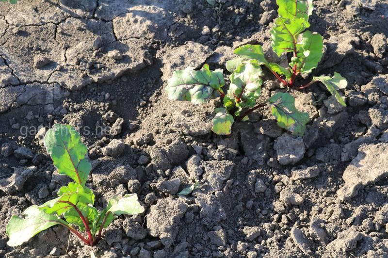 Как влияет кальцинация на pH почвы?
