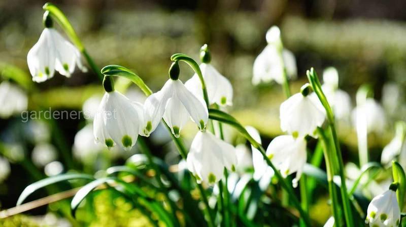 Список цветов, которые помогут скрасить белый холодный пейзаж зимой