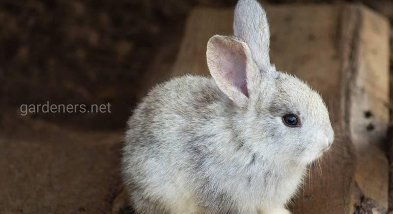 Коротка енциклопедія кролячих зубів: відповіді на найбільш поширені питання