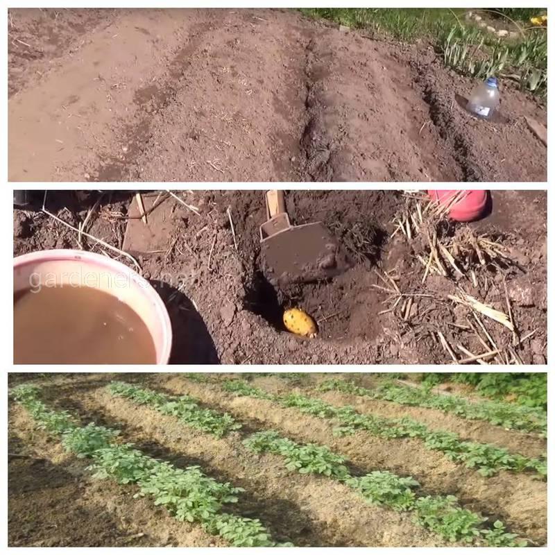 Как определить значение рН почвы?