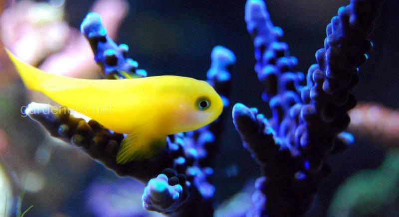 Разновидности аквариумов
