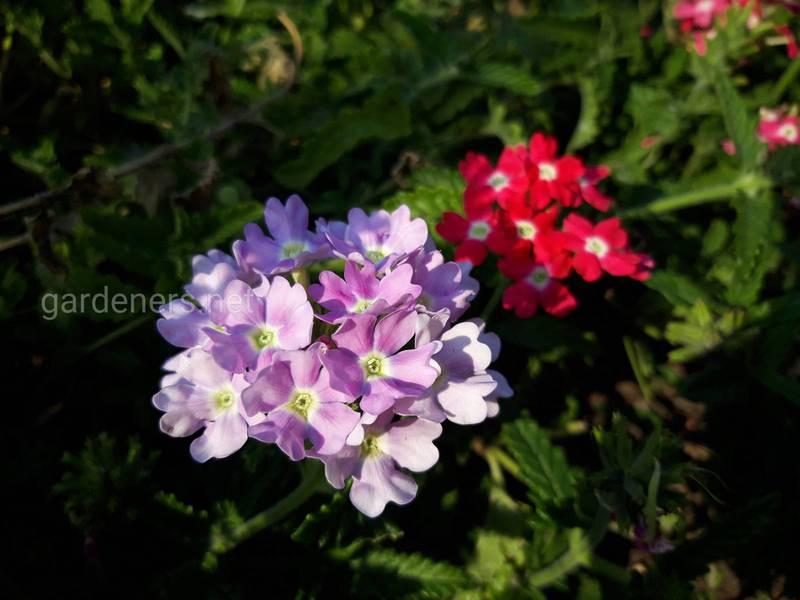Цветы, которые цветут все лето
