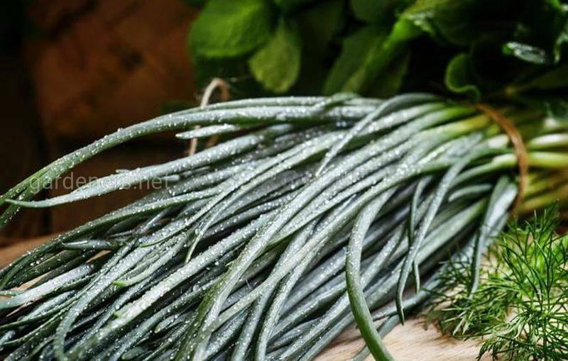 Советы по выращиванию овощей из остатков!
