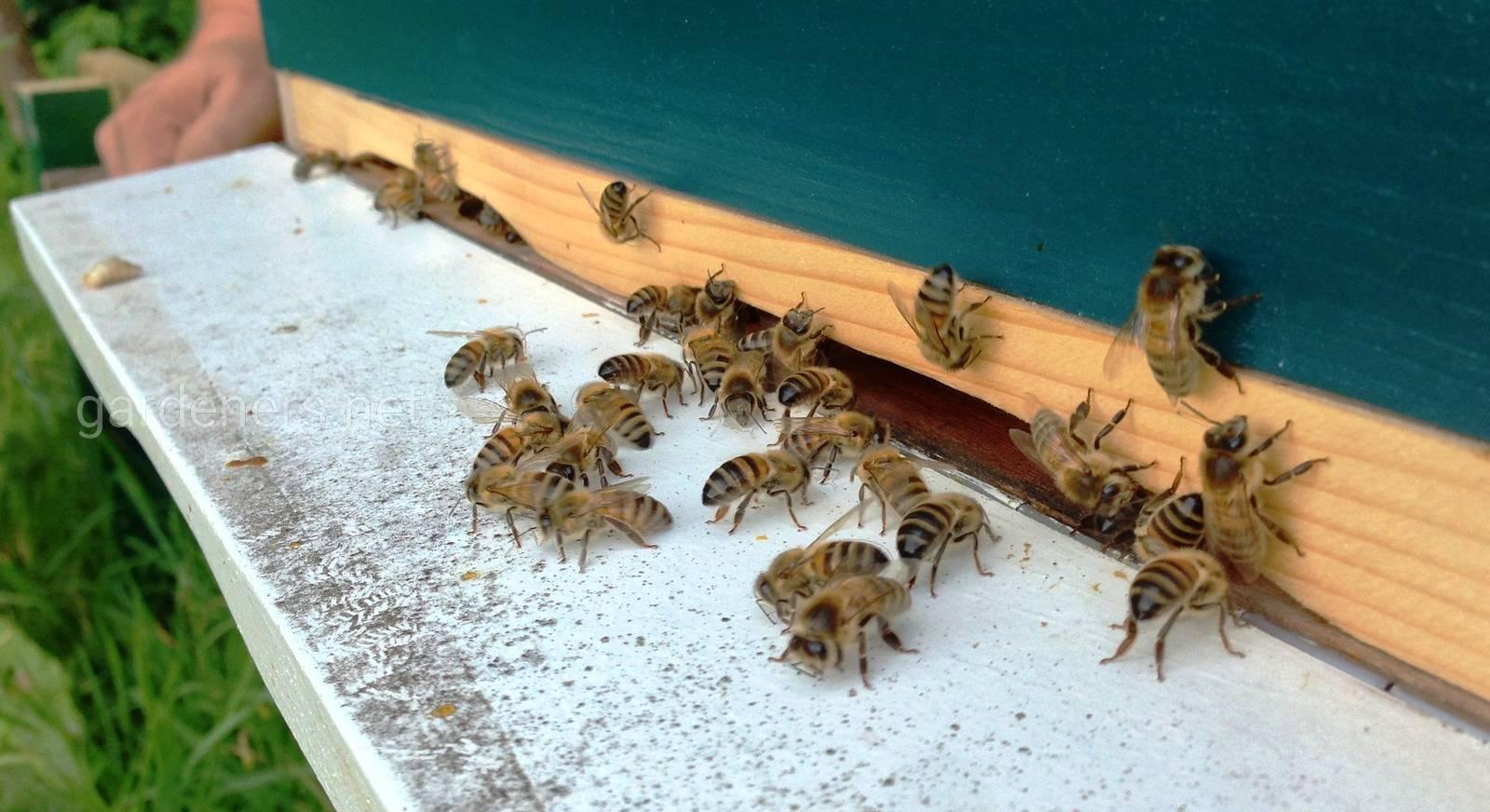 пчелы в апреле.jpg