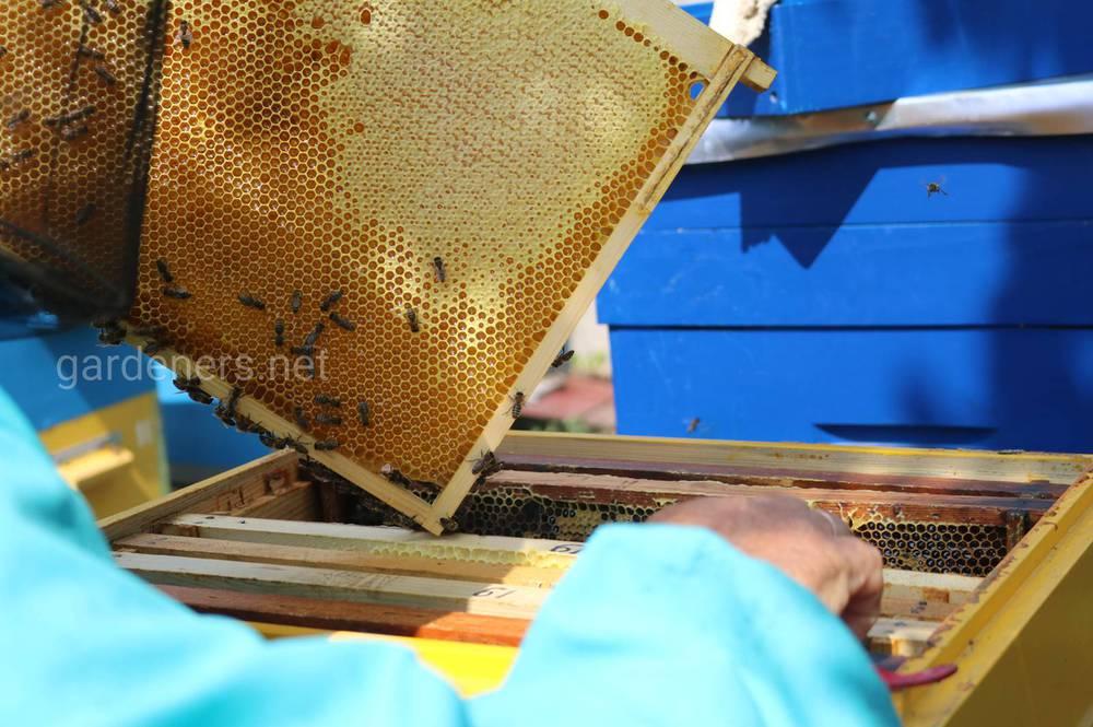 Как работают пчелы