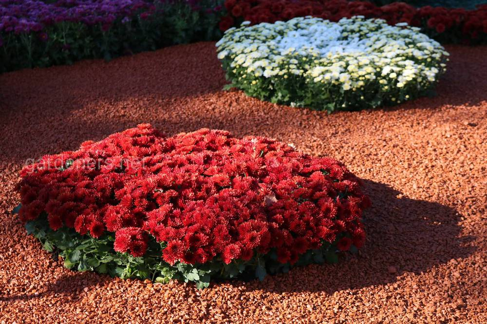 Декоруємо сад кольоровим камінням