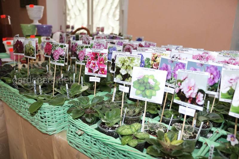 Що робити з недавно купленими кімнатними рослинами?