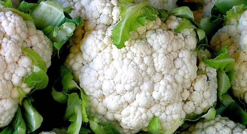 Какие физиологические расстройства могут возникнуть при выращивании цветной капусты?