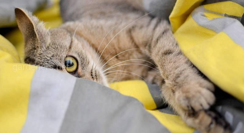 Кіт у будинку: як привчити його до лотка