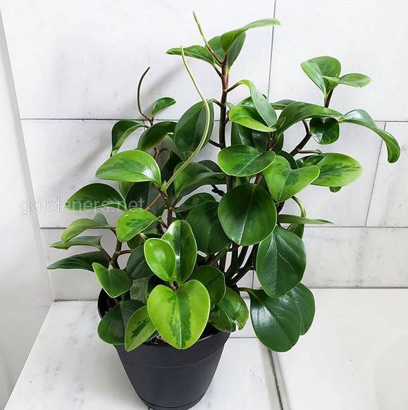 Как ухаживать за комнатными растениями в ноябре?