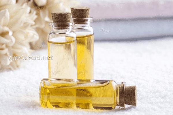 Инструменты и ингредиенты для создания духов