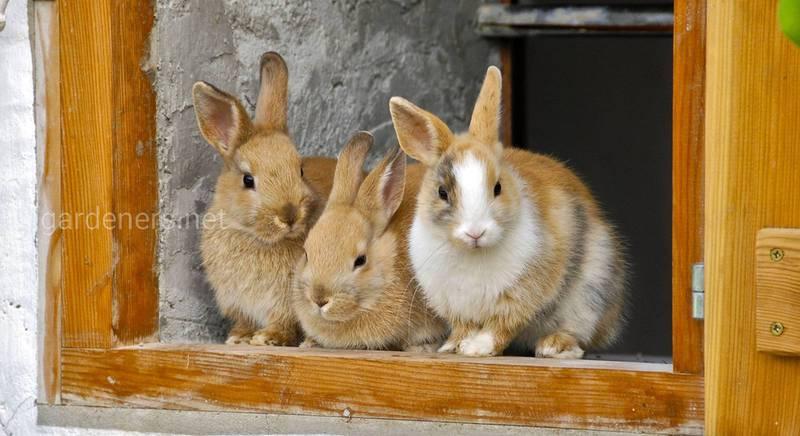 Домик для кроликов: как оборудовать крольчатник