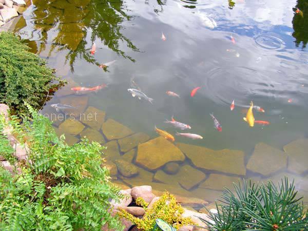 Підготовка риби та рослин до зими