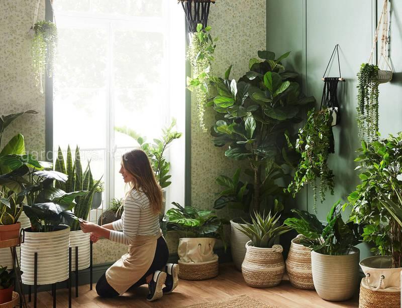 Какие самые распространённые вредители комнатным растений? Как их распознать и откуда они берутся?