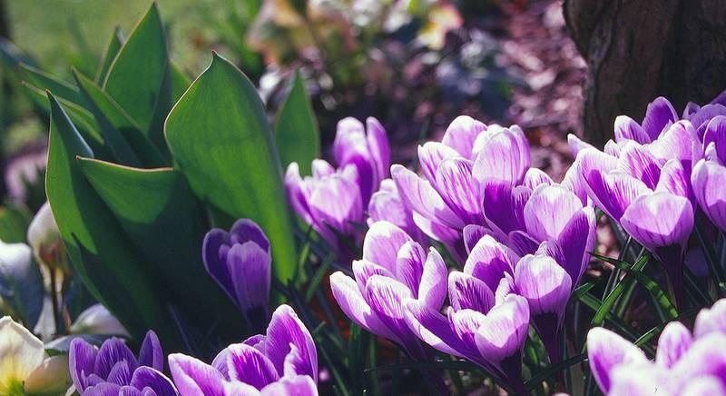 Апрельские хлопоты в саду и огороде