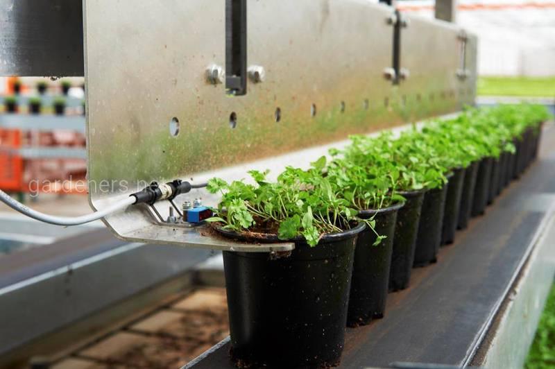 Передовые датские технологии выращивания салатных культур