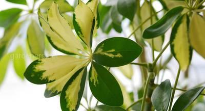 Растения для выращивания на холодном полу
