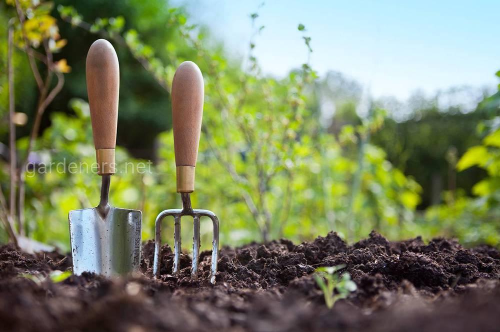 Органические удобрения действуют неодинаково на различные овощи