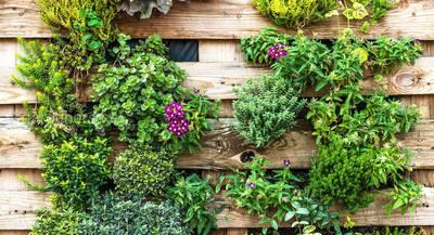 Создание вертикального сада: формирование, подбор растений и уход