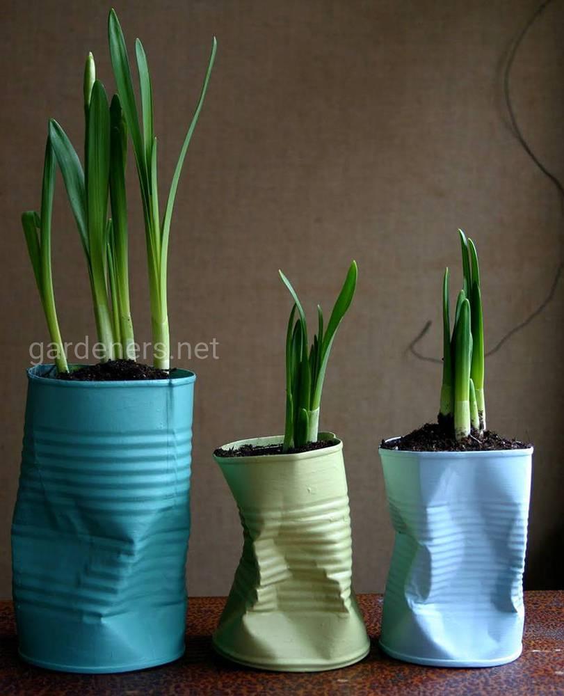 Растения в жестяных банках
