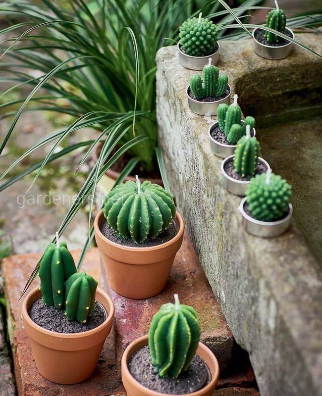 Какие условия необходимы для развития молодых кактусов?