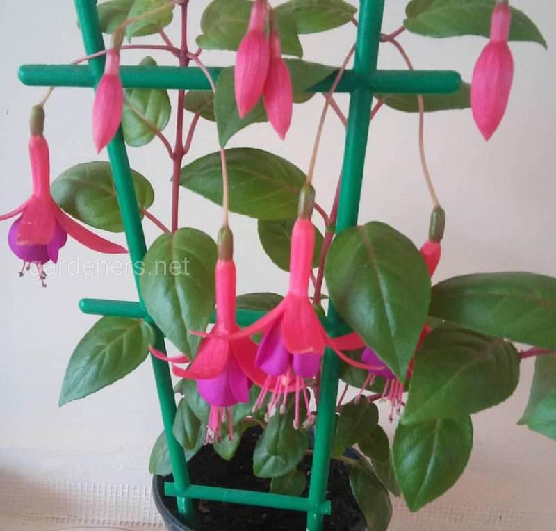 Які температурні і світлові умови потрібні різним квітам?