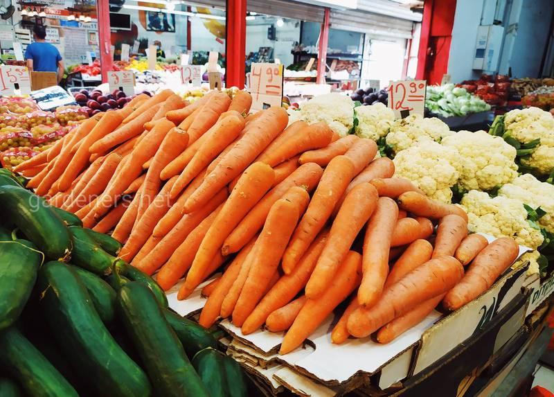 Хранение моркови в течение зимы