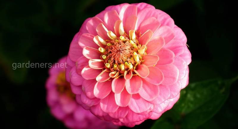 flower-3649607_1920.jpg