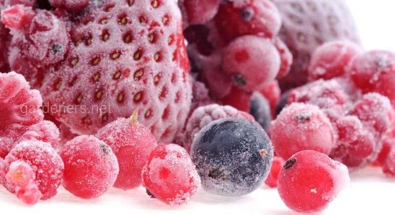 Як правильно заморозити ягоди, щоб вони залишилися смачними і корисними