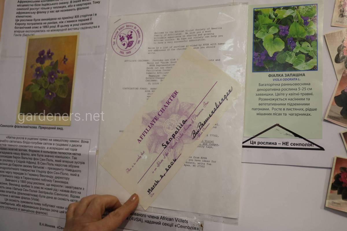 зарегистрированные сорта фиалок в AVSA