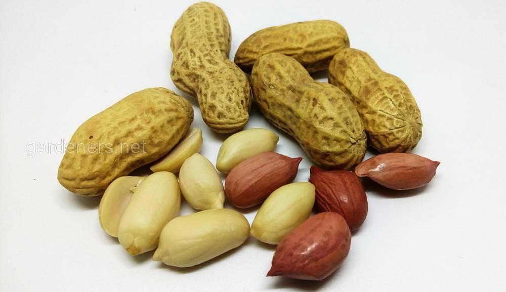 Суточная норма арахиса