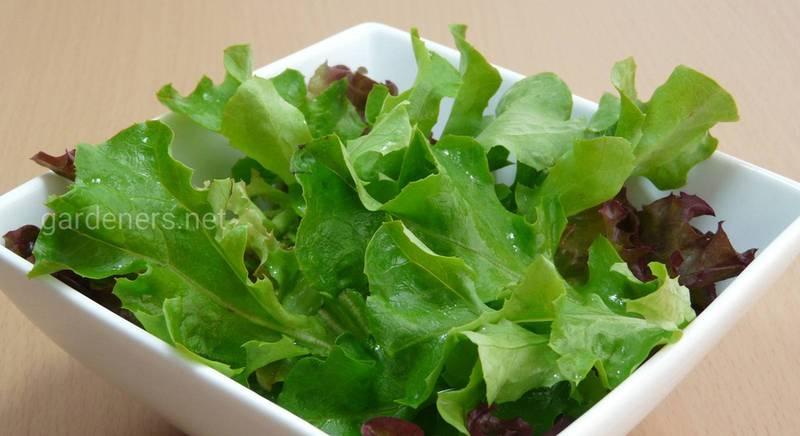 Вибір та зберігання салату!