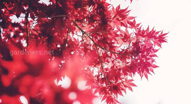 листопадные деревья.jpg