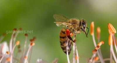 Перевозка пчел в ульях