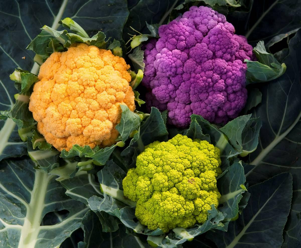 Разноцветная цветная капуста