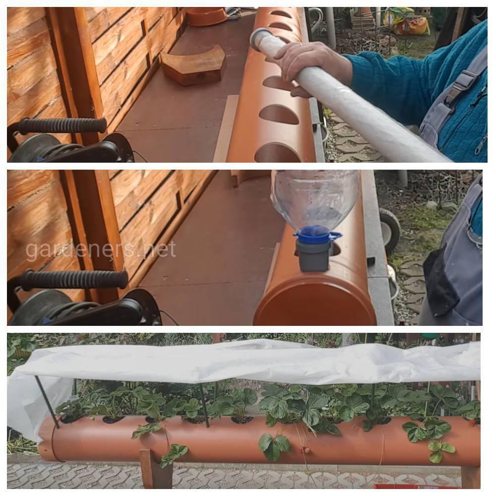 клубника в канализационной трубе
