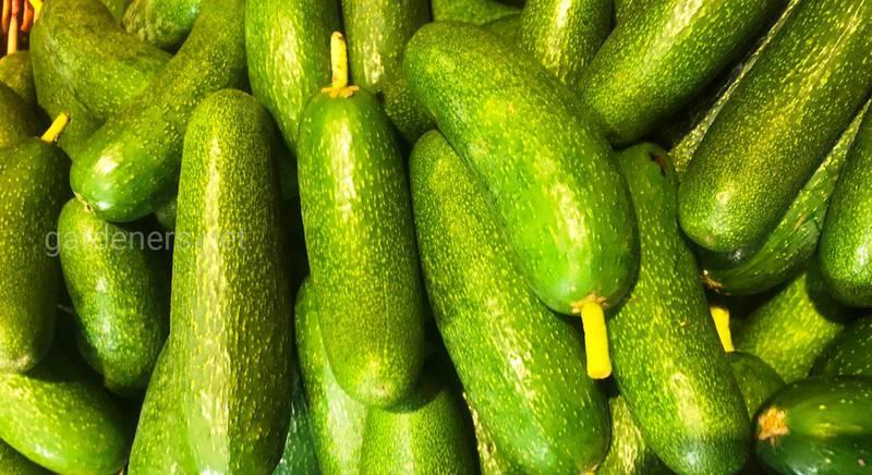 авокадо без косточки.jpeg
