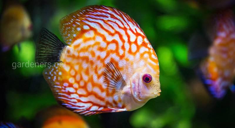 Описание 10 самых популярных рыбок для аквариума