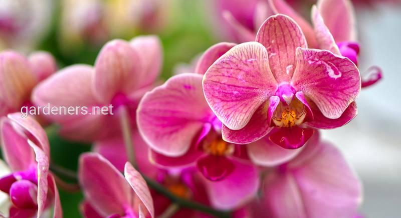 Лучшие удобрения для орхидей