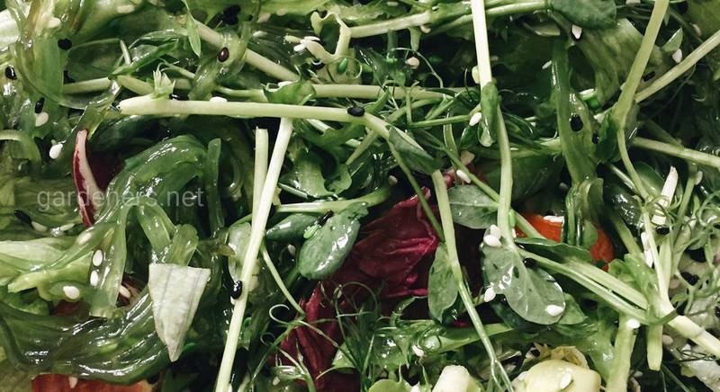 Рецепт корисного зеленого салату
