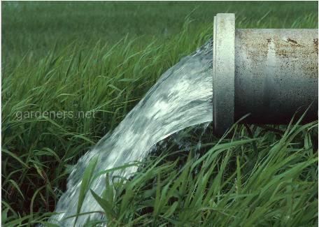 Эйхорния - растение очищающее сточные воды