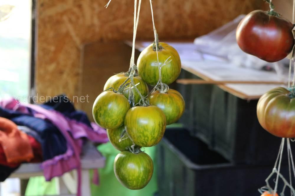 Сорт томатов «Малахитовая шкатулка».JPG