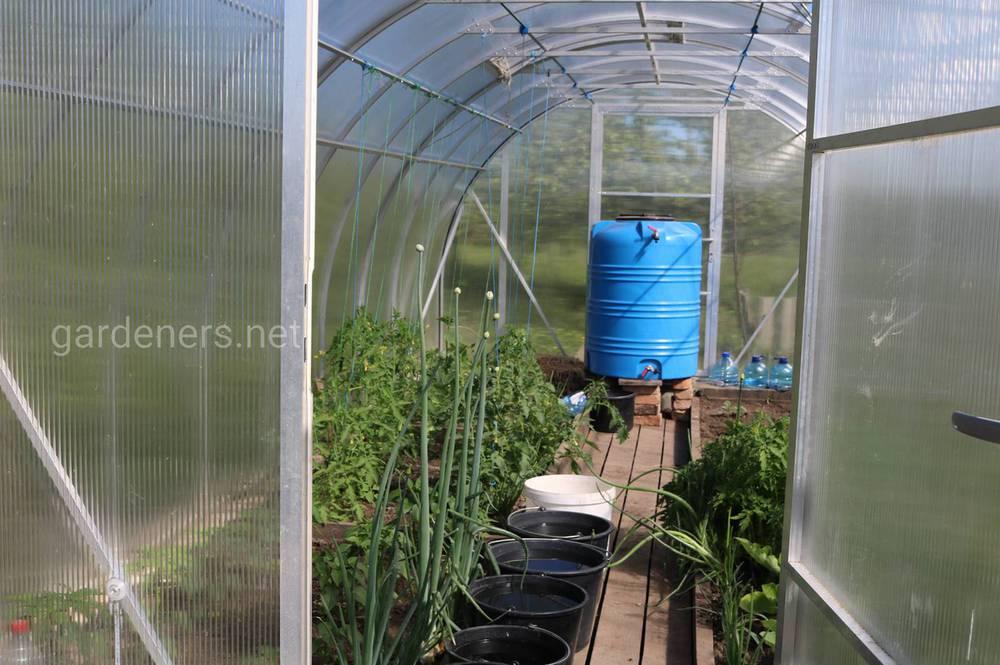 Особенности расположение овощных культур в теплице