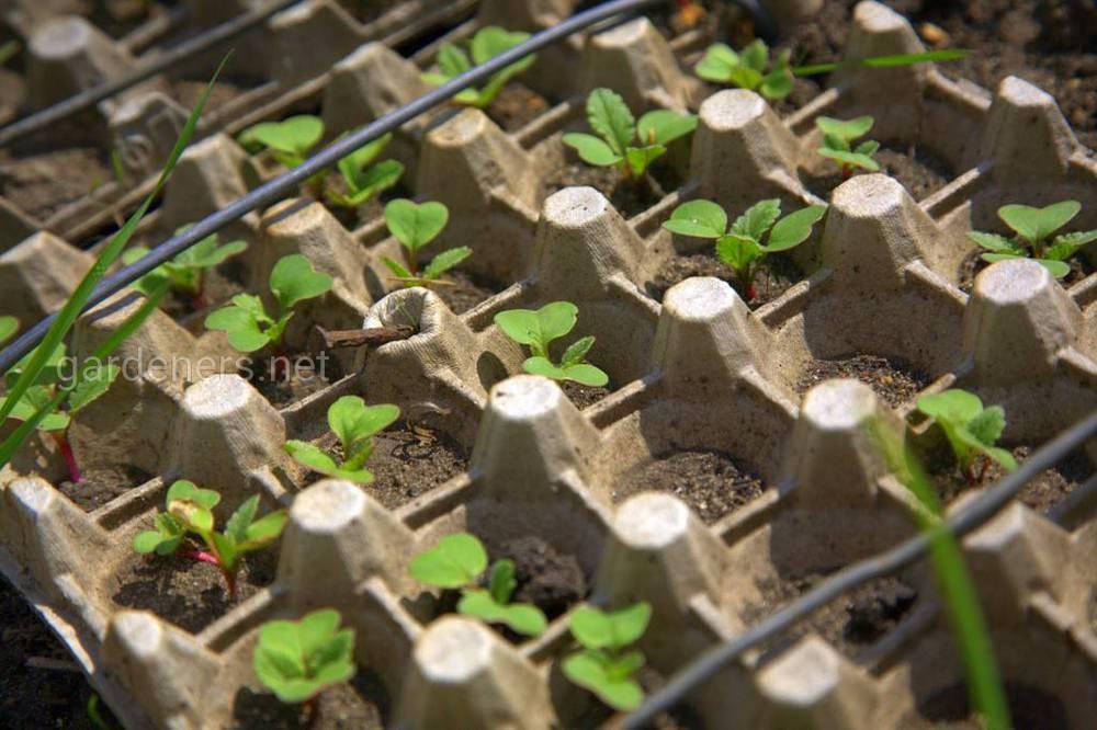 Контейнер из-под яиц для выращивания зелени